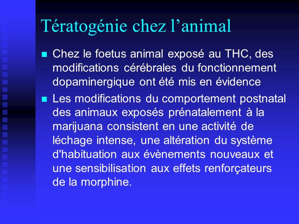 Tératogénie chez lanimal Chez le foetus animal exposé au THC, des modifications cérébrales du fonctionnement dopaminergique ont été mis en évidence Le