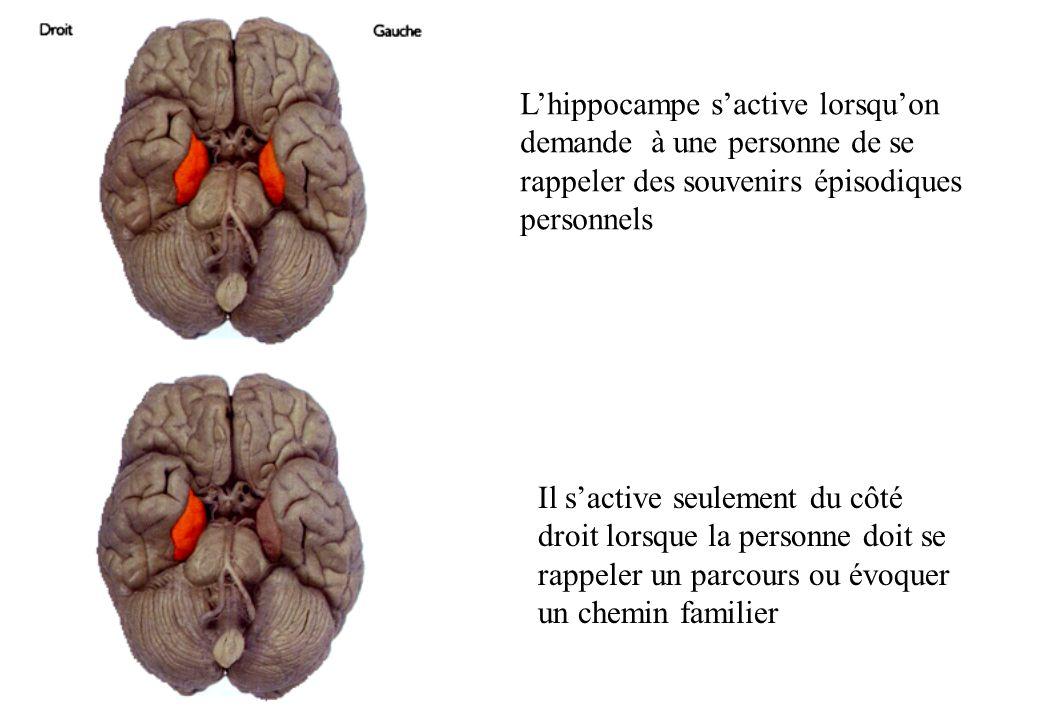 Lhippocampe sactive lorsquon demande à une personne de se rappeler des souvenirs épisodiques personnels Il sactive seulement du côté droit lorsque la