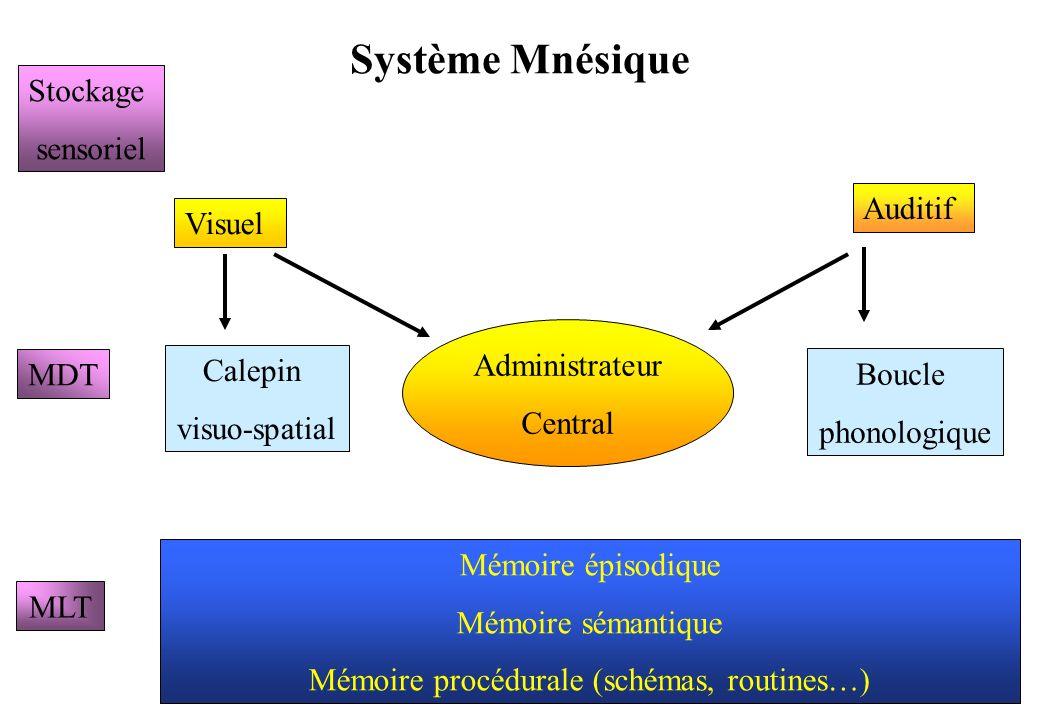 Système Mnésique Visuel Auditif Administrateur Central Boucle phonologique Calepin visuo-spatial MLT MDT Stockage sensoriel Mémoire épisodique Mémoire