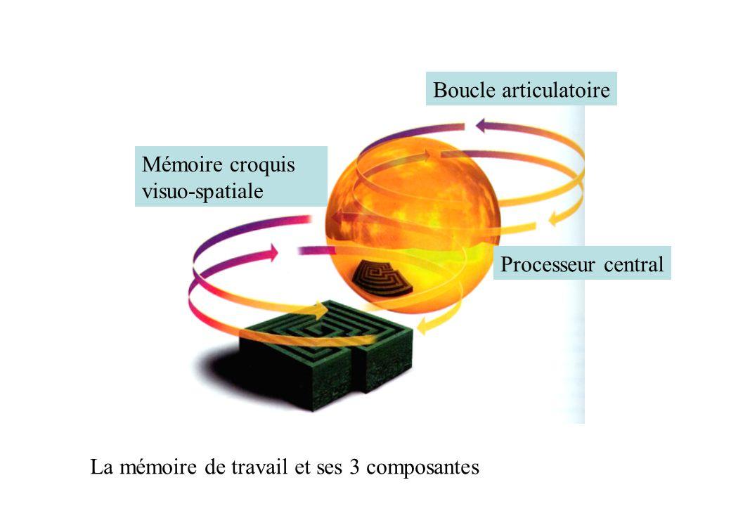 La mémoire de travail et ses 3 composantes Mémoire croquis visuo-spatiale Boucle articulatoire Processeur central