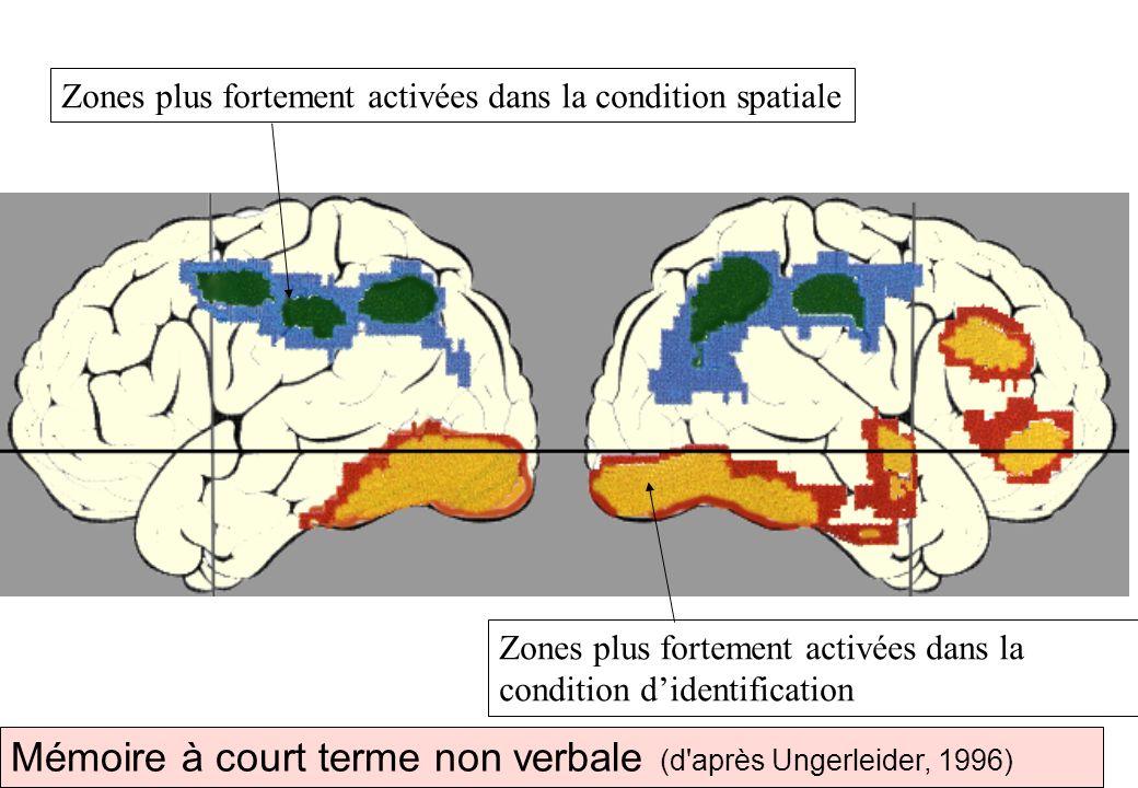 Mémoire à court terme non verbale (d'après Ungerleider, 1996) Zones plus fortement activées dans la condition spatiale Zones plus fortement activées d
