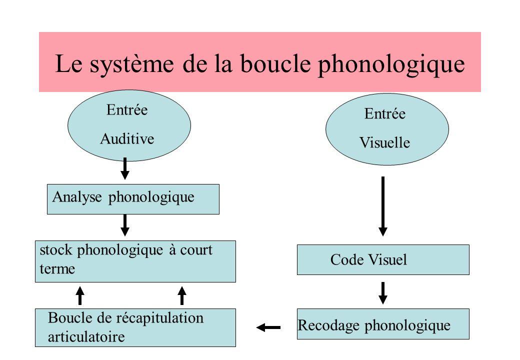 Le système de la boucle phonologique Recodage phonologique Code Visuel Entrée Visuelle Entrée Auditive Analyse phonologique stock phonologique à court