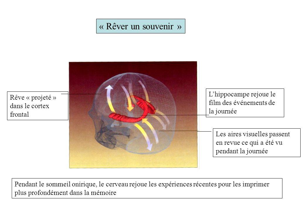« Rêver un souvenir » Rêve « projeté » dans le cortex frontal Pendant le sommeil onirique, le cerveau rejoue les expériences récentes pour les imprime