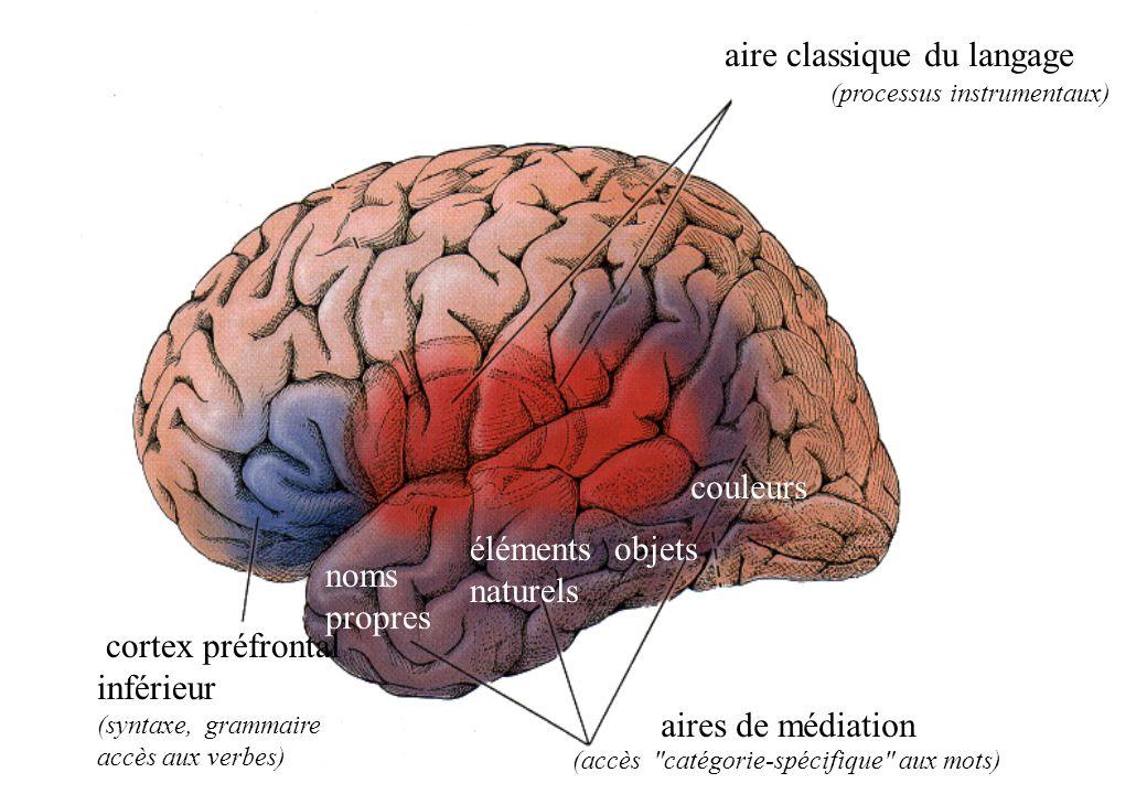 aire classique du langage aires de médiation cortex préfrontal inférieur (syntaxe, grammaire accès aux verbes) (processus instrumentaux) (accès