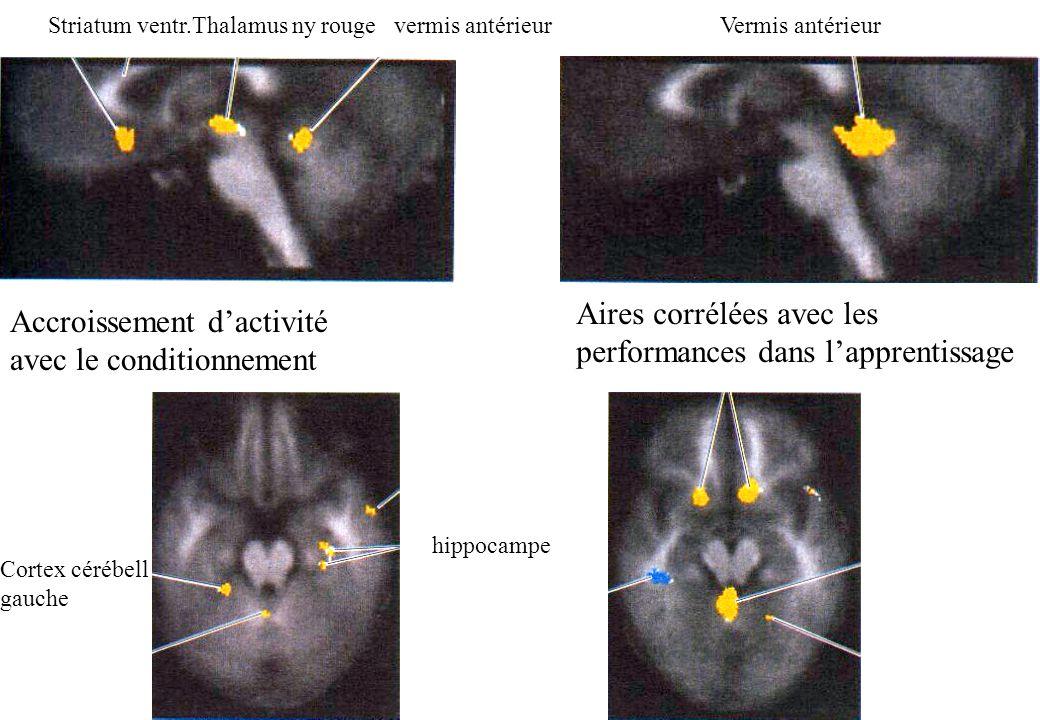 Accroissement dactivité avec le conditionnement Striatum ventr.Thalamus ny rouge vermis antérieurVermis antérieur Aires corrélées avec les performance