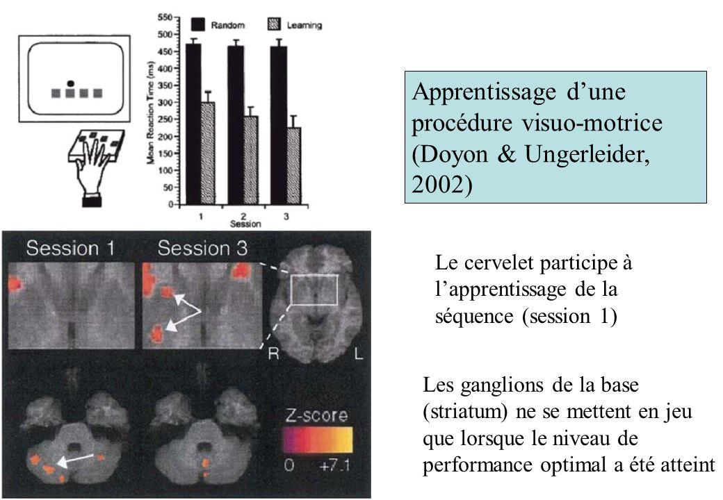 Apprentissage dune procédure visuo-motrice (Doyon & Ungerleider, 2002) Le cervelet participe à lapprentissage de la séquence (session 1) Les ganglions