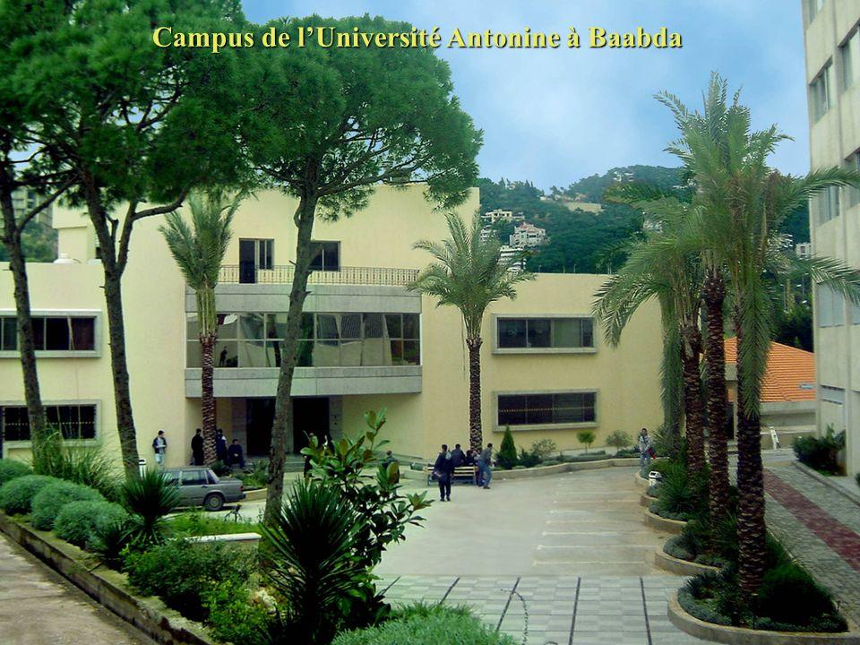 Université Antonine UPA Bienvenue Réussir Ensemble Votre Education Supérieure
