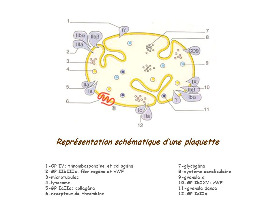 Patients : Étude en CMF Ac anti-GP CD42bCD41aCD61 Intensité moyenne de fluorescence IMF Type I35,221,821,79 Type II25,494,8016,35 IMF (% par rapport à la normale) Type I112.8818,630,74 Type II81.6949,136,71 RESULTATS (4) p<0,01 P=0,14