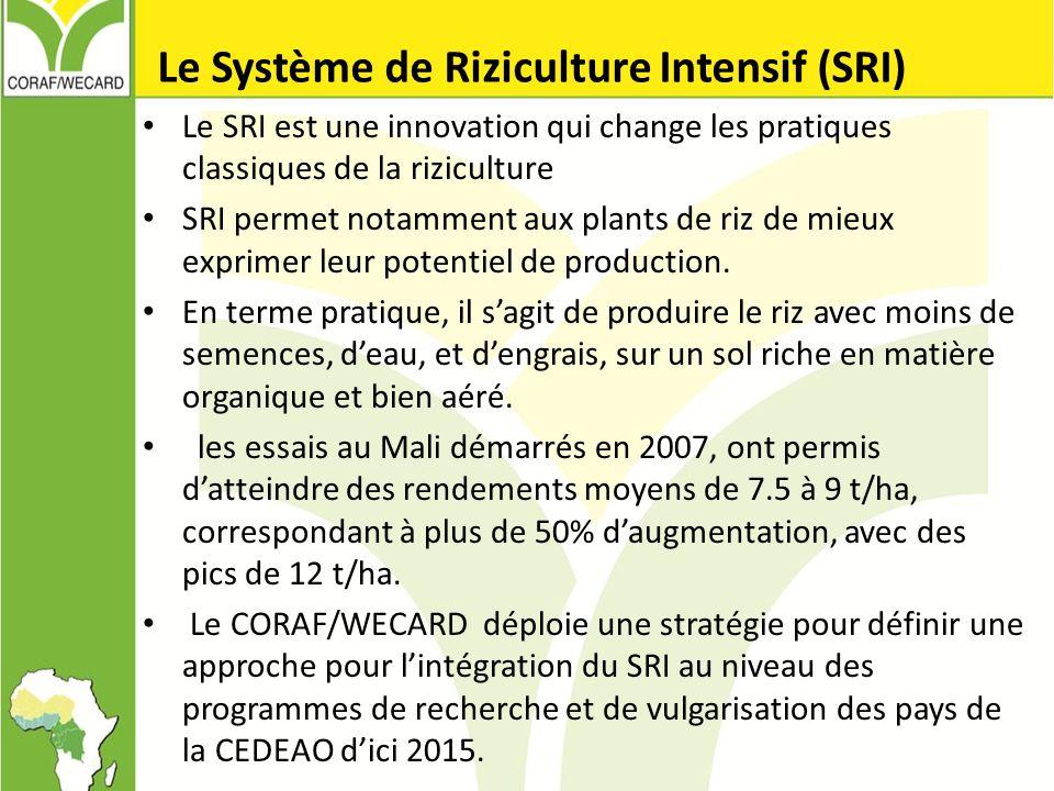 Le Système de Riziculture Intensif (SRI) Le SRI est une innovation qui change les pratiques classiques de la riziculture SRI permet notamment aux plan