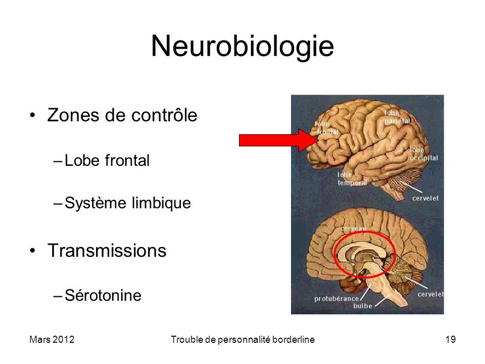 Mars 2012Trouble de personnalité borderline19 Neurobiologie Zones de contrôle –Lobe frontal –Système limbique Transmissions –Sérotonine