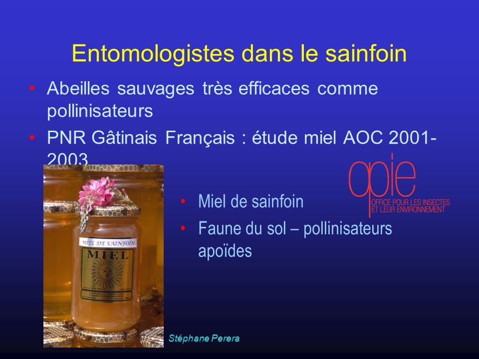 Entomologistes dans le sainfoin Abeilles sauvages très efficaces comme pollinisateurs PNR Gâtinais Français : étude miel AOC 2001- 2003 Stéphane Perer