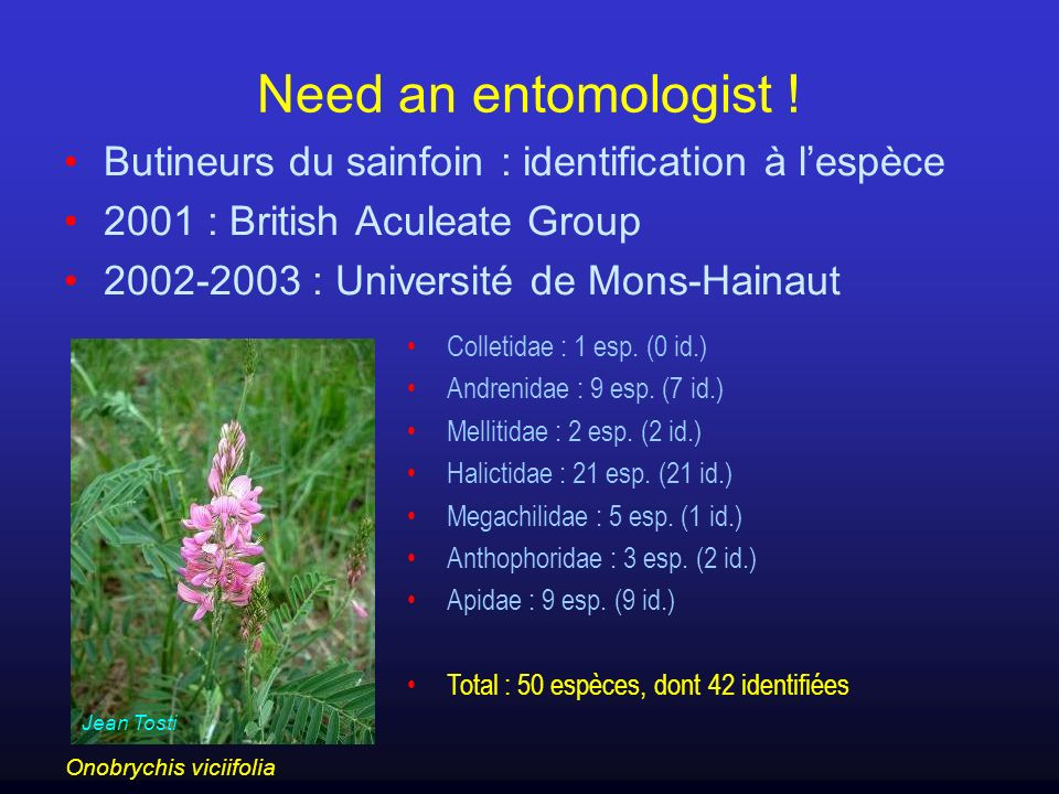 Need an entomologist ! Butineurs du sainfoin : identification à lespèce 2001 : British Aculeate Group 2002-2003 : Université de Mons-Hainaut Jean Tost