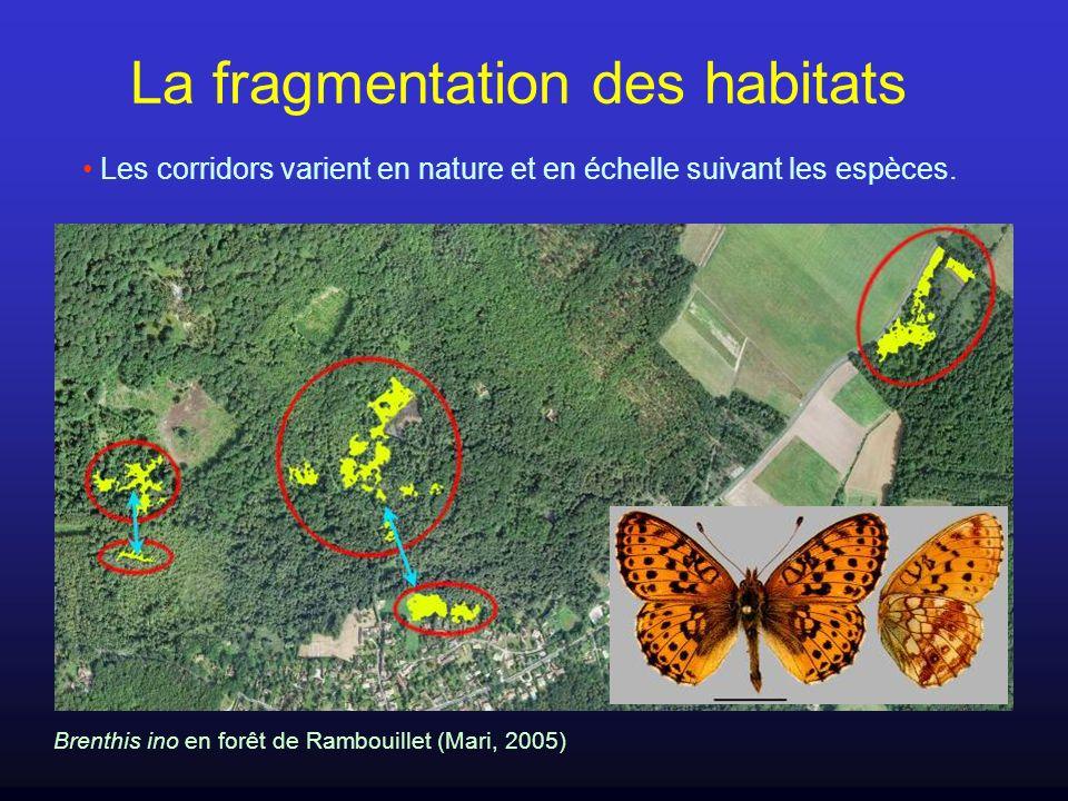 Les corridors varient en nature et en échelle suivant les espèces. La fragmentation des habitats Brenthis ino en forêt de Rambouillet (Mari, 2005)