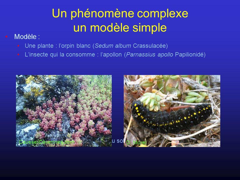 Un phénomène complexe un modèle simple Modèle : Une plante : lorpin blanc (Sedum album Crassulacée) Linsecte qui la consomme : lapollon (Parnassius ap