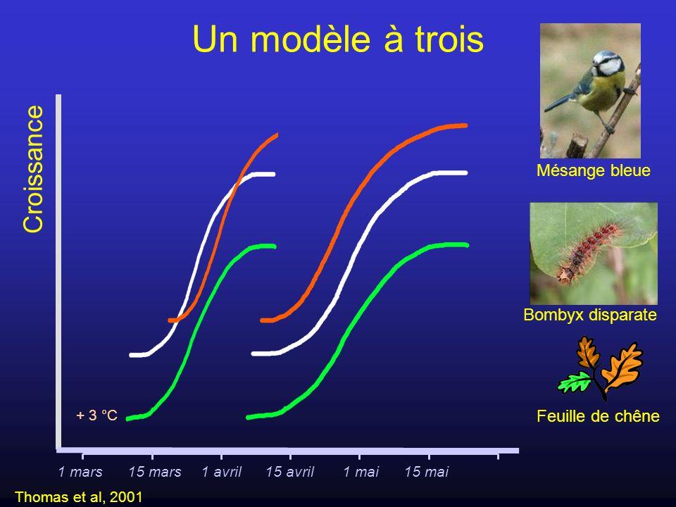 + 3 °C Un modèle à trois Croissance Thomas et al, 2001 1 mars15 mars1 avril15 avril1 mai15 mai Feuille de chêne Bombyx disparate Mésange bleue