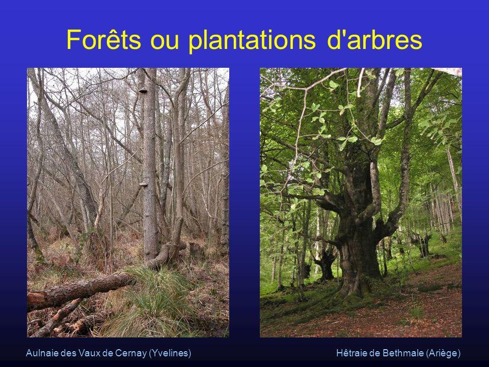 Hêtraie de Bethmale (Ariège)Aulnaie des Vaux de Cernay (Yvelines) Forêts ou plantations d'arbres