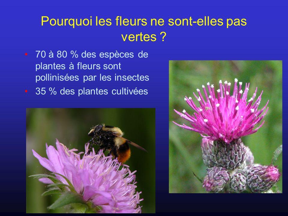Pourquoi les fleurs ne sont-elles pas vertes ? 70 à 80 % des espèces de plantes à fleurs sont pollinisées par les insectes 35 % des plantes cultivées