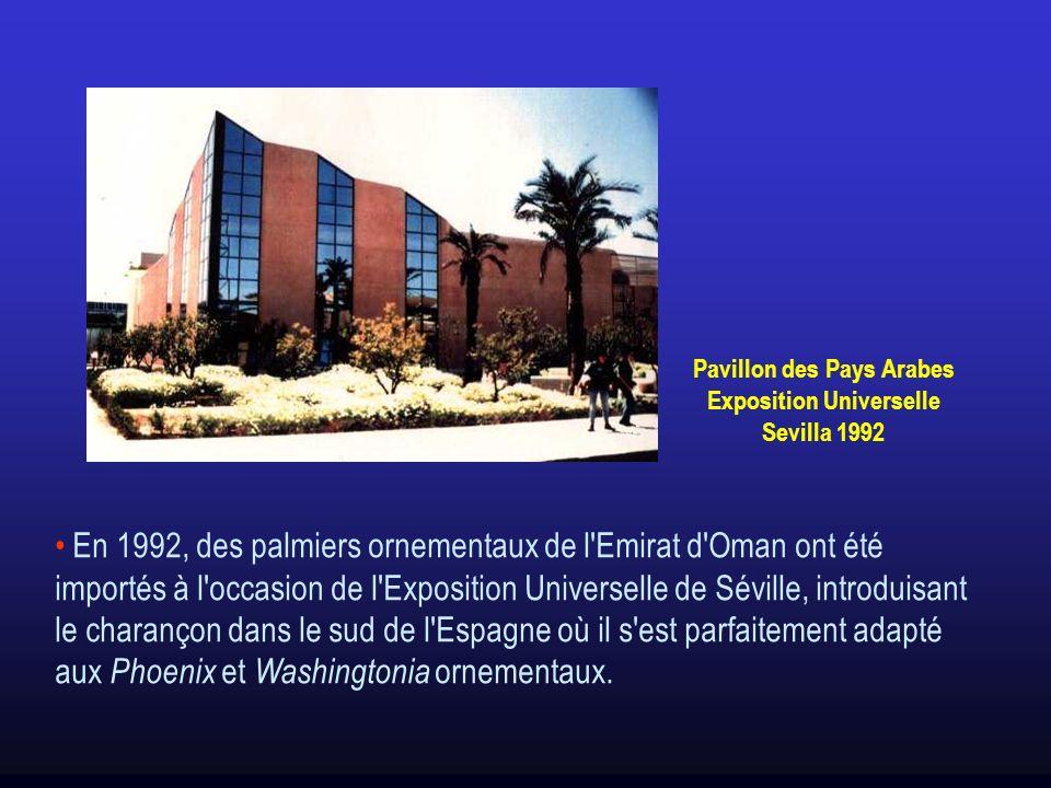 En 1992, des palmiers ornementaux de l'Emirat d'Oman ont été importés à l'occasion de l'Exposition Universelle de Séville, introduisant le charançon d