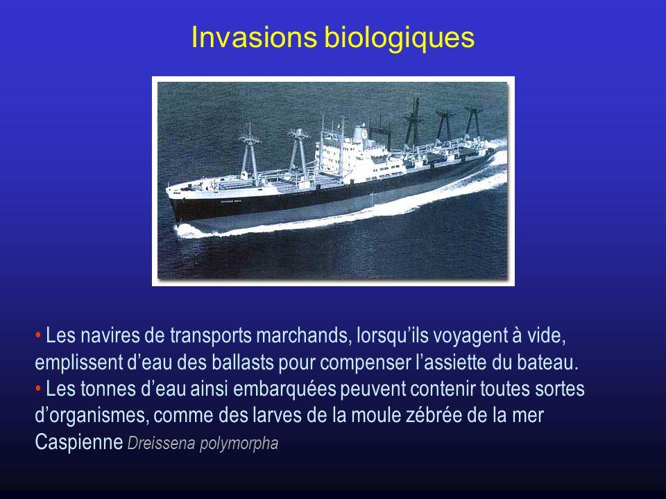 Les navires de transports marchands, lorsquils voyagent à vide, emplissent deau des ballasts pour compenser lassiette du bateau. Les tonnes deau ainsi