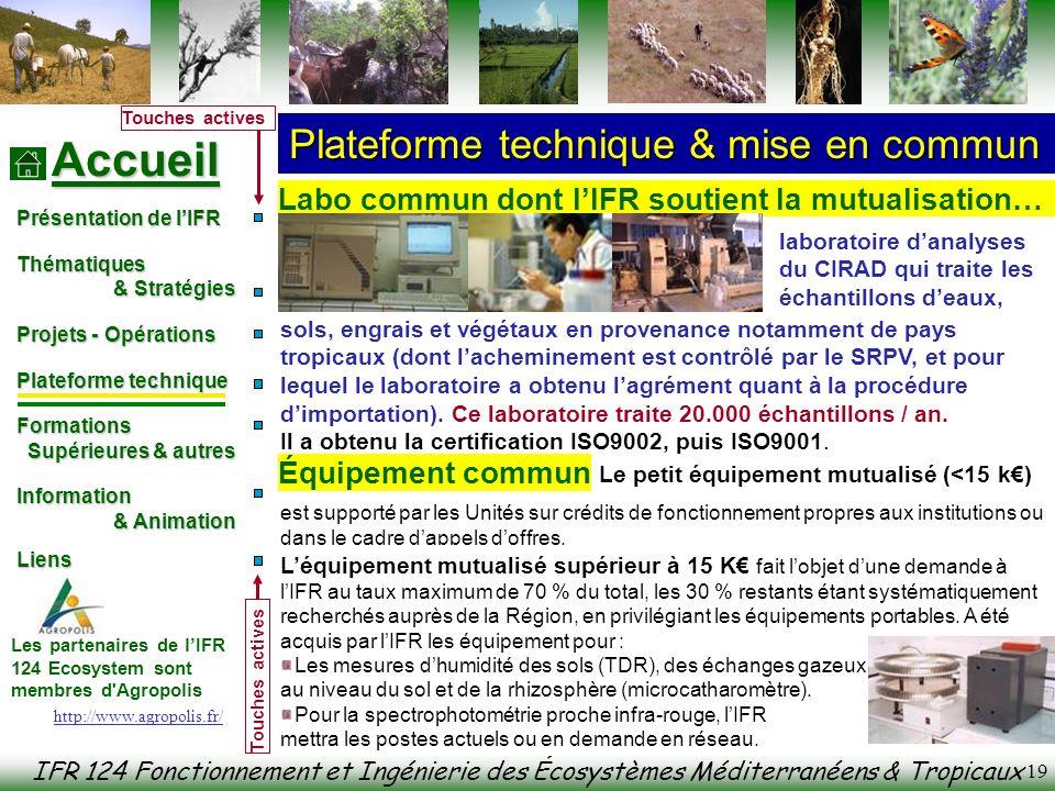 IFR 124 Fonctionnement et Ingénierie des Écosystèmes Méditerranéens & Tropicaux Accueil Présentation de lIFR Thématiques & Stratégies & Stratégies Pro