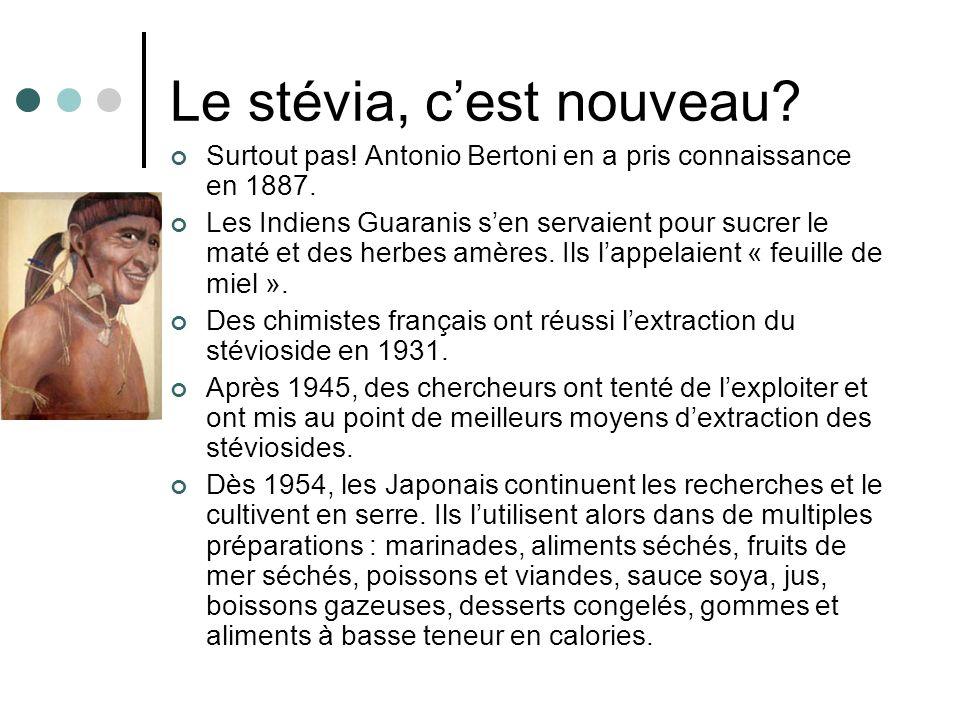 Le stévia, cest nouveau? Surtout pas! Antonio Bertoni en a pris connaissance en 1887. Les Indiens Guaranis sen servaient pour sucrer le maté et des he