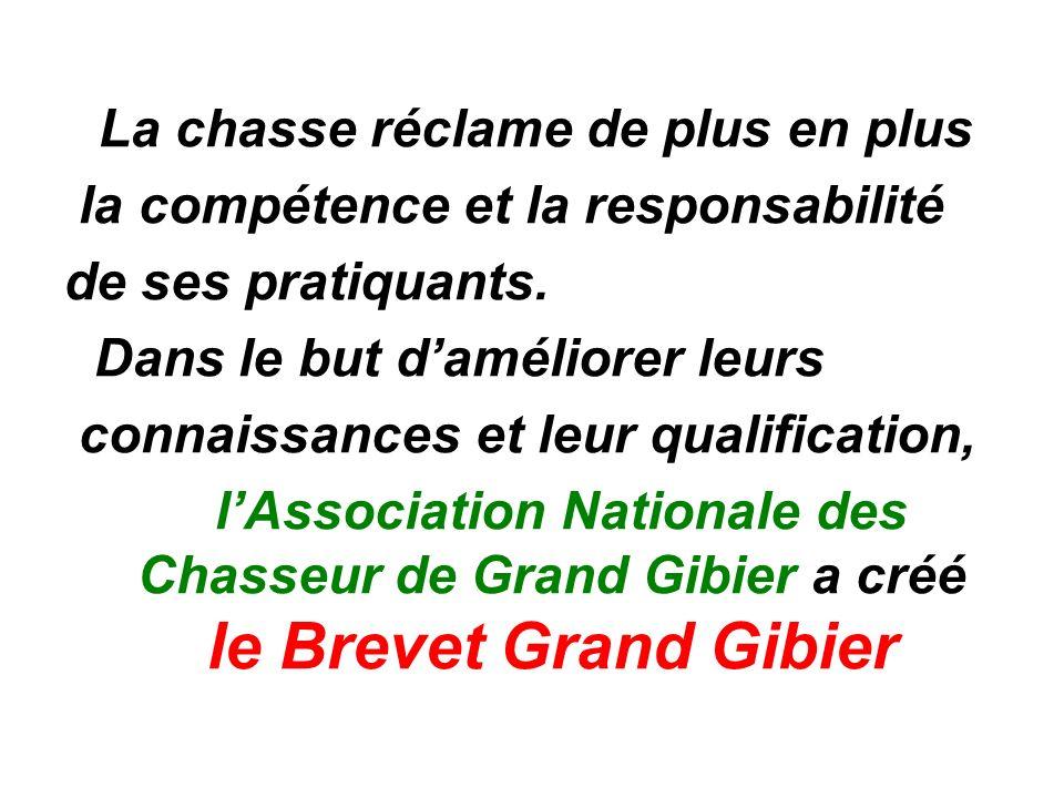 Le brevet Grand Gibier comporte deux épreuves *Une épreuve de tir.