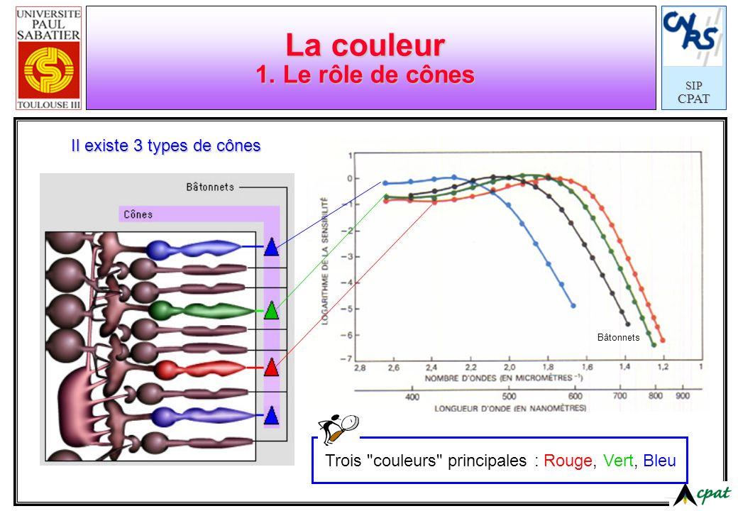 SIPCPAT La couleur 1. Le rôle de cônes Il existe 3 types de cônes Bâtonnets Trois