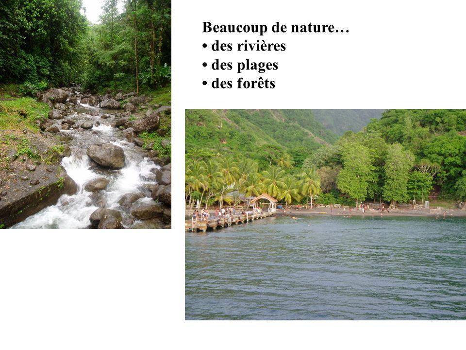 Beaucoup de nature… des rivières des plages des forêts
