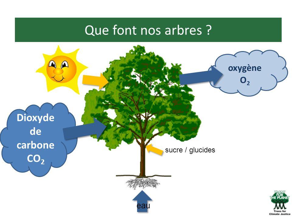 Que font nos arbres ? Dioxyde de carbone CO 2 eau oxygène O 2 sucre / glucides