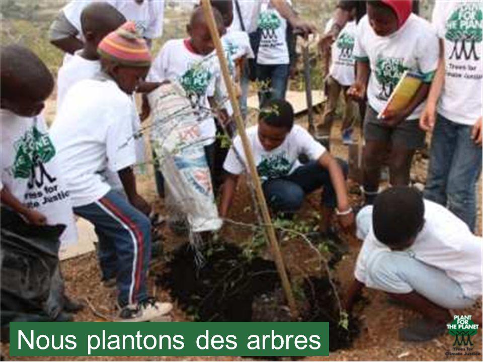 Nous plantons des arbres