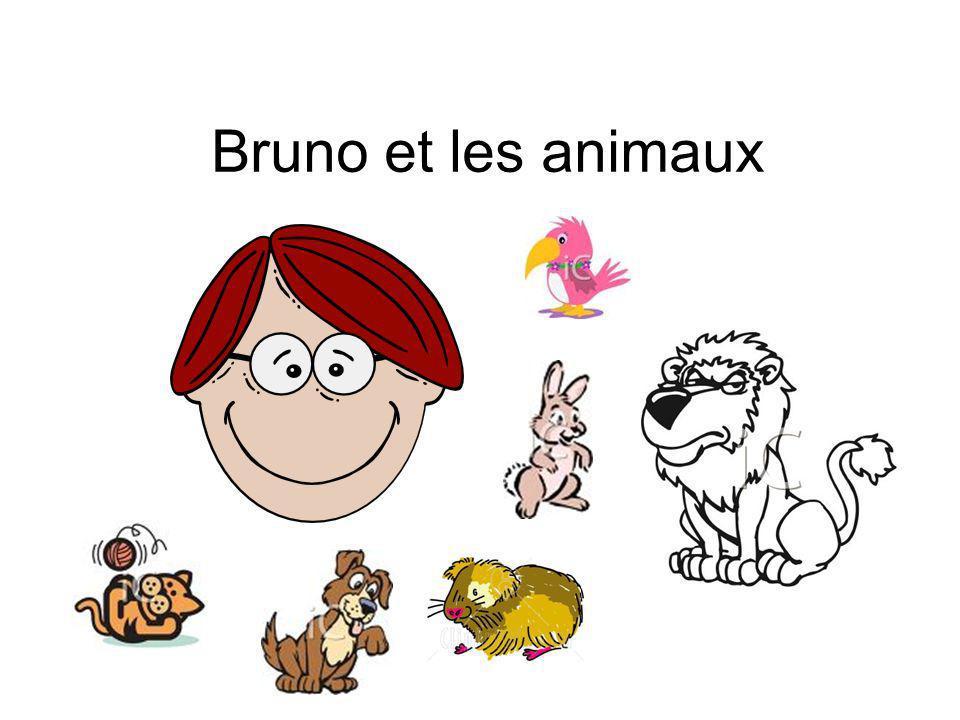 Bruno et les animaux