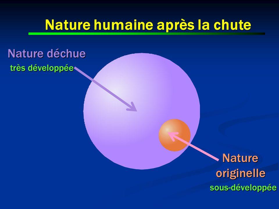 Nature déchue très développée très développée Natureoriginelle sous-développée sous-développée Nature humaine après la chute