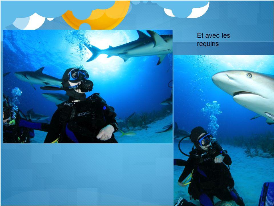 Et avec les requins