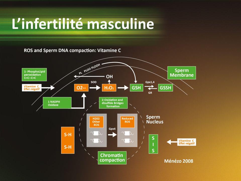 Linfertilité masculine