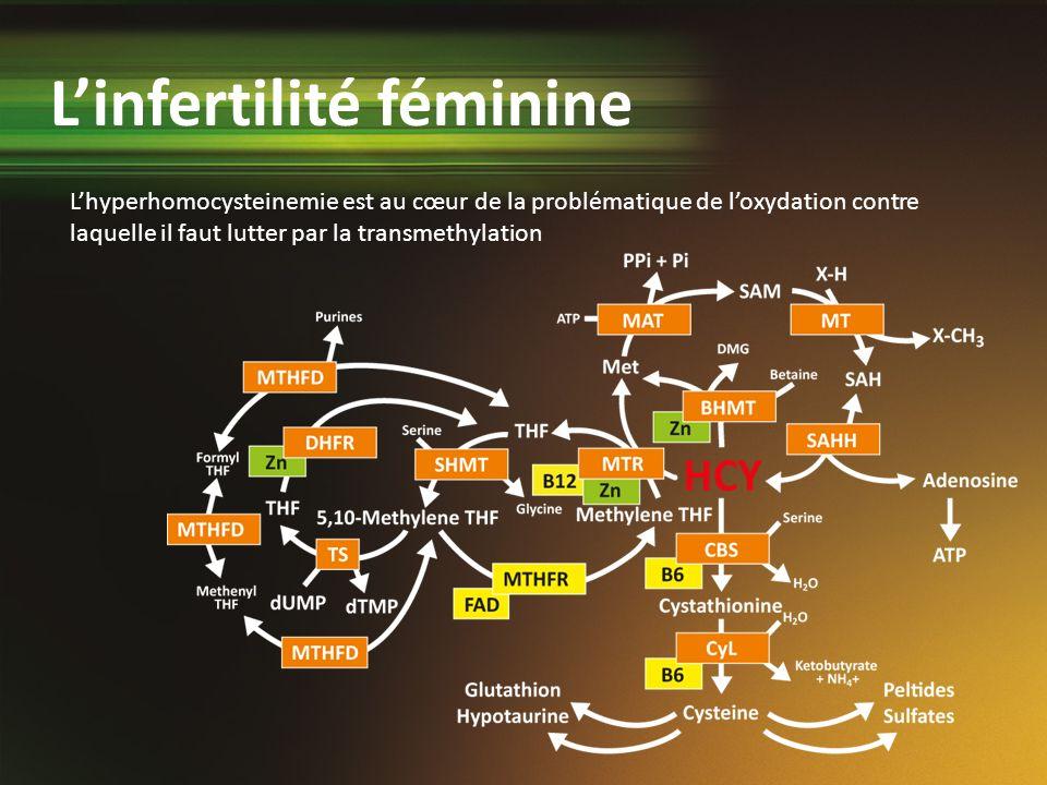 Lhyperhomocysteinemie est au cœur de la problématique de loxydation contre laquelle il faut lutter par la transmethylation Linfertilité féminine