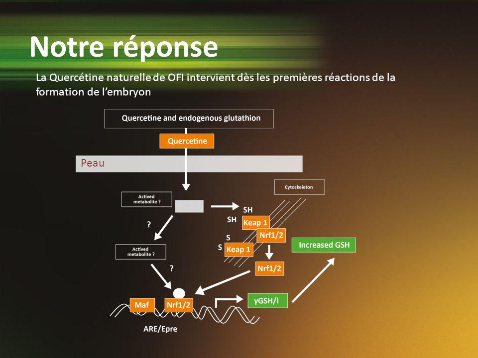 La Quercétine naturelle de OFI intervient dès les premières réactions de la formation de lembryon Peau