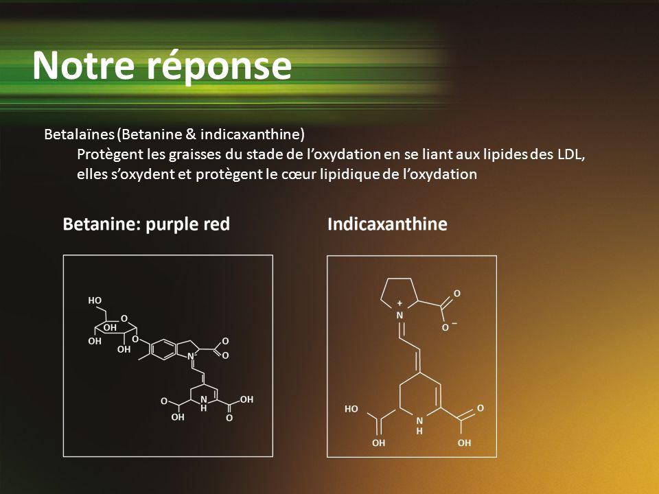 Betalaïnes (Betanine & indicaxanthine) Protègent les graisses du stade de loxydation en se liant aux lipides des LDL, elles soxydent et protègent le c