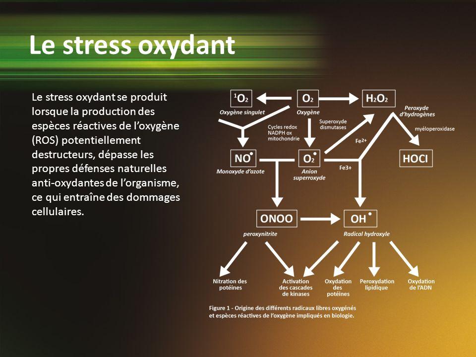 Le stress oxydant se produit lorsque la production des espèces réactives de loxygène (ROS) potentiellement destructeurs, dépasse les propres défenses