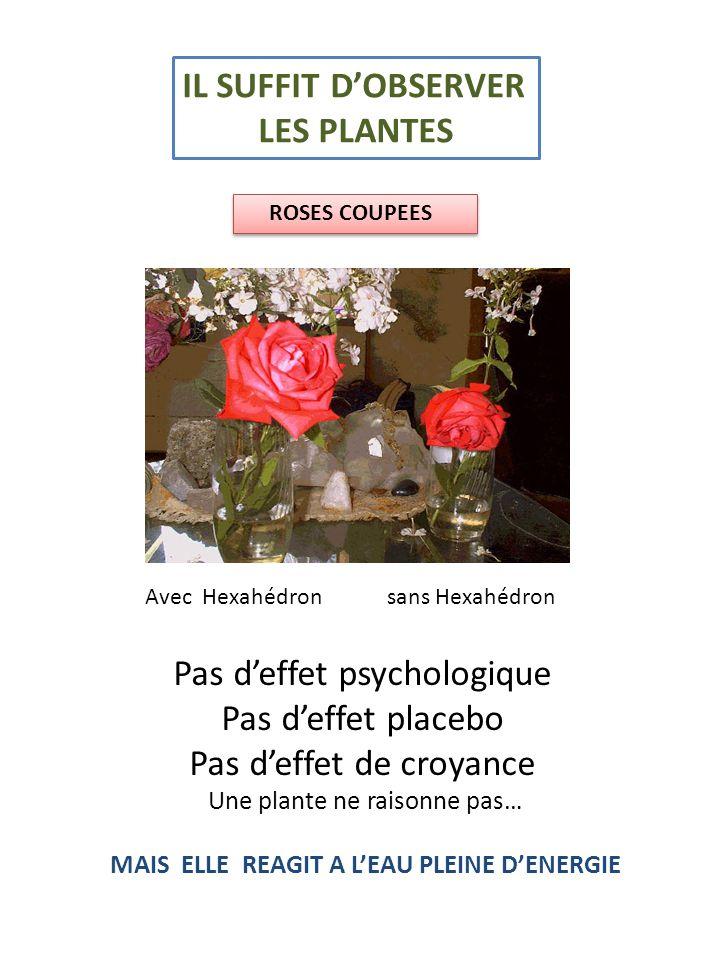 ROSES COUPEES IL SUFFIT DOBSERVER LES PLANTES Pas deffet psychologique Pas deffet placebo Pas deffet de croyance Une plante ne raisonne pas… MAIS ELLE