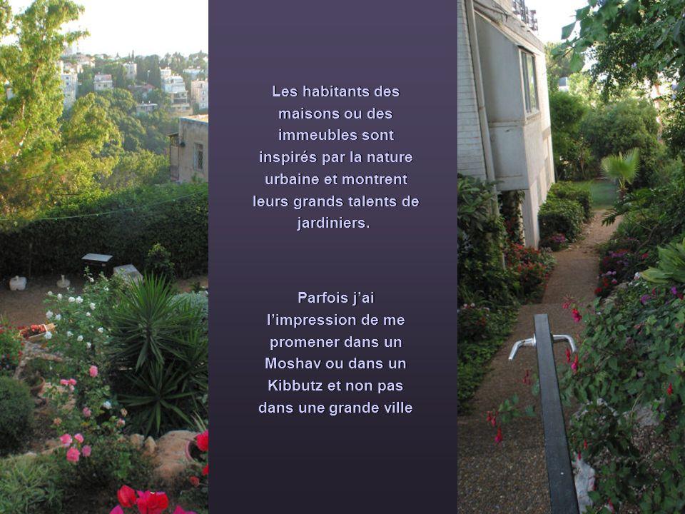 Les habitants des maisons ou des immeubles sont inspirés par la nature urbaine et montrent leurs grands talents de jardiniers. Parfois jai limpression