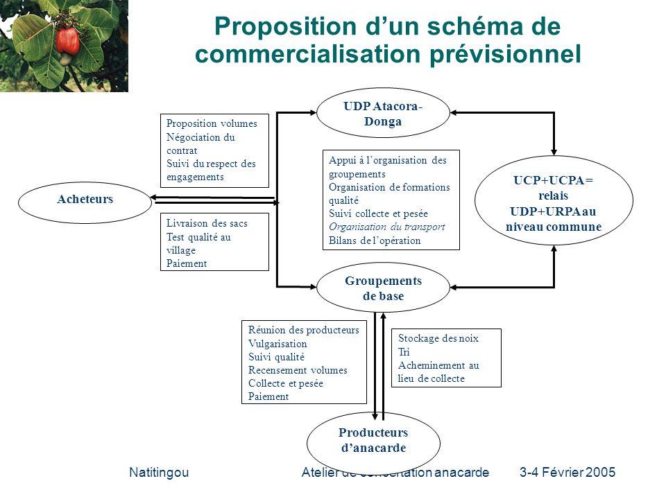 NatitingouAtelier de concertation anacarde 3-4 Février 2005 Proposition dun schéma de commercialisation prévisionnel Acheteurs UDP Atacora- Donga Prod