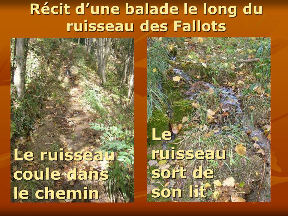 Le ruisseau coule dans le chemin Le ruisseau sort de son lit Récit dune balade le long du ruisseau des Fallots