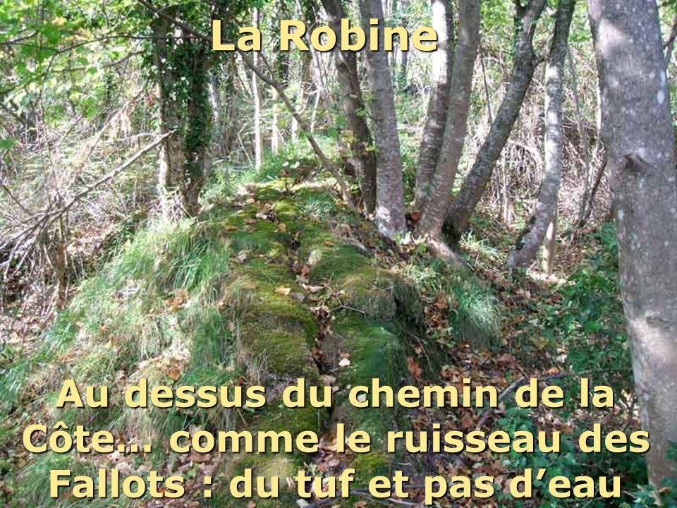La Robine Au dessus du chemin de la Côte… comme le ruisseau des Fallots : du tuf et pas deau