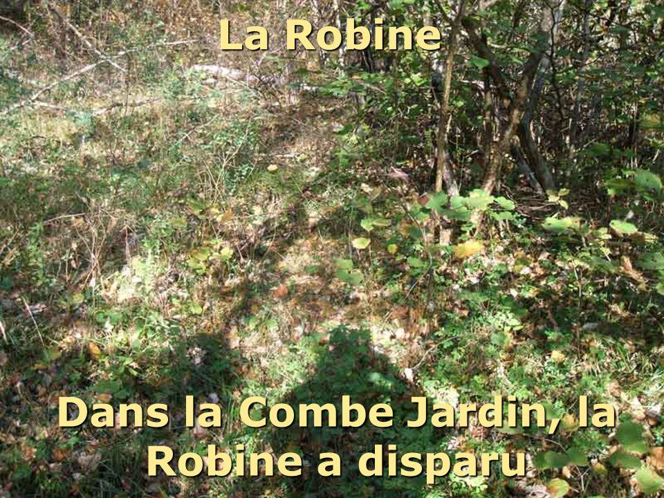 Dans la Combe Jardin, la Robine a disparu La Robine