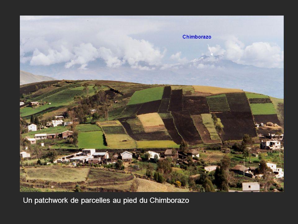 Un patchwork de parcelles au pied du Chimborazo Chimborazo