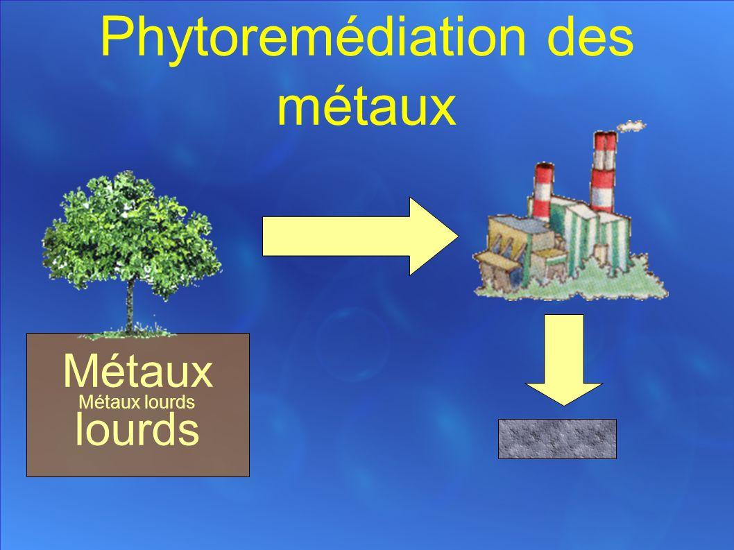 Phytoremédiation des métaux Métaux lourds