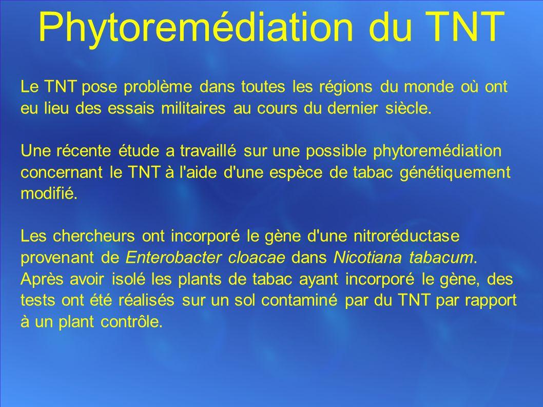 Phytoremédiation du TNT Le TNT pose problème dans toutes les régions du monde où ont eu lieu des essais militaires au cours du dernier siècle.