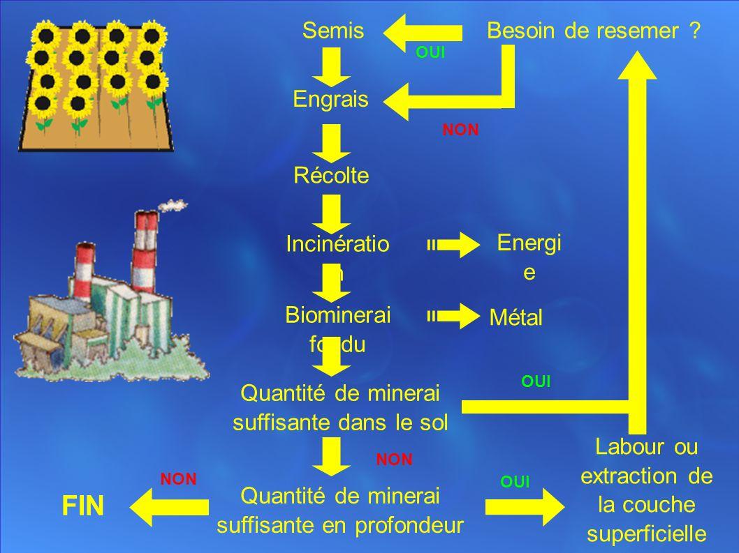 Semis Engrais Récolte Incinératio n Biominerai fondu Quantité de minerai suffisante dans le sol Quantité de minerai suffisante en profondeur FIN Labour ou extraction de la couche superficielle Besoin de resemer .