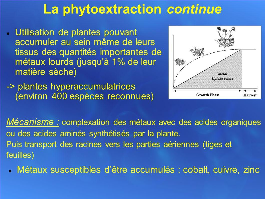 La phytoextraction continue Utilisation de plantes pouvant accumuler au sein même de leurs tissus des quantités importantes de métaux lourds (jusqu à 1% de leur matière sèche) -> plantes hyperaccumulatrices (environ 400 espèces reconnues) Mécanisme : complexation des métaux avec des acides organiques ou des acides aminés synthétisés par la plante.
