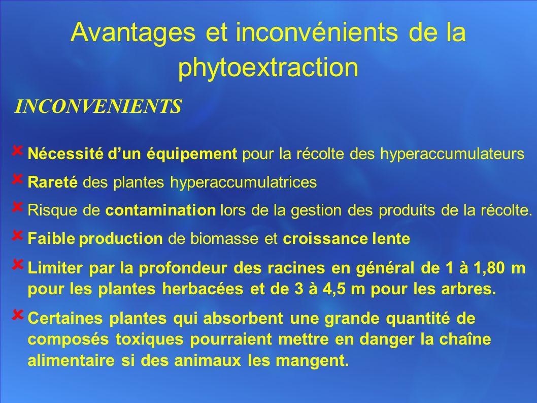 Avantages et inconvénients de la phytoextraction INCONVENIENTS Nécessité dun équipement pour la récolte des hyperaccumulateurs Rareté des plantes hyperaccumulatrices Risque de contamination lors de la gestion des produits de la récolte.